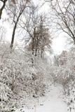 Χιονισμένοι δέντρα και οι Μπους Στοκ Φωτογραφία