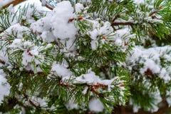 Χιονισμένοι κλάδοι έλατου στο χειμερινό δάσος στοκ φωτογραφίες με δικαίωμα ελεύθερης χρήσης