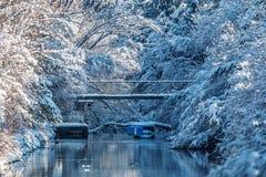 Χιονισμένοι κλάδοι και ποταμός isar στον ήλιο στοκ εικόνες με δικαίωμα ελεύθερης χρήσης