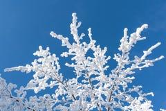Χιονισμένοι κλάδοι στο υπόβαθρο του μπλε ουρανού Στοκ φωτογραφία με δικαίωμα ελεύθερης χρήσης