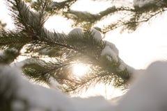 Χιονισμένοι κλάδοι των δέντρων έλατου στον ηλιόλουστο καιρό, κινηματογράφηση σε πρώτο πλάνο Στοκ Φωτογραφίες