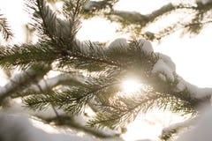 Χιονισμένοι κλάδοι των δέντρων έλατου στον ηλιόλουστο καιρό, κινηματογράφηση σε πρώτο πλάνο Στοκ Εικόνες