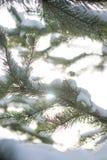 Χιονισμένοι κλάδοι των δέντρων έλατου στον ηλιόλουστο καιρό, κινηματογράφηση σε πρώτο πλάνο Στοκ εικόνα με δικαίωμα ελεύθερης χρήσης