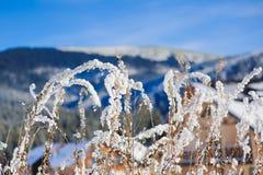 Χιονισμένος θάμνος στα χειμερινά βουνά Στοκ Φωτογραφία