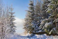 Χιονισμένος θάμνος στα χειμερινά βουνά Στοκ Εικόνα