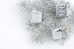 Χιονισμένος κλάδος πεύκων Στοκ εικόνες με δικαίωμα ελεύθερης χρήσης