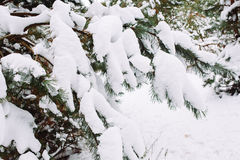 Χιονισμένος κλάδος δέντρων στο ηλιοβασίλεμα Στοκ εικόνα με δικαίωμα ελεύθερης χρήσης