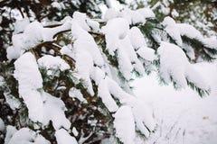 Χιονισμένος κλάδος δέντρων στο ηλιοβασίλεμα Στοκ Φωτογραφία