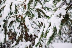 Χιονισμένος κλάδος δέντρων στο ηλιοβασίλεμα Στοκ Εικόνες