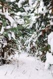Χιονισμένος κλάδος δέντρων στο ηλιοβασίλεμα Στοκ φωτογραφία με δικαίωμα ελεύθερης χρήσης