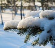 Χιονισμένος κλάδος δέντρων στοκ εικόνες με δικαίωμα ελεύθερης χρήσης