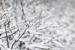 Χιονισμένος μίσχος θάμνων παγετού στον παγωμένο επίγειο χειμώνα, οι χιονισμένοι Μπους χωρίς φύλλα, εκλεκτική εστίαση Στοκ Φωτογραφίες