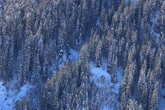 Χιονισμένος πιό forrest σε μια απότομη κλίση στοκ εικόνα