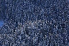 Χιονισμένος πιό forrest σε μια απότομη κλίση στοκ εικόνες