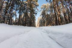 Χιονισμένος δρόμος στο χειμερινό δάσος Στοκ Εικόνες