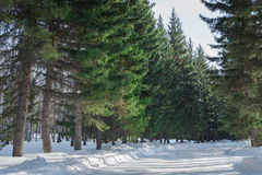 Χιονισμένος δρόμος στο χειμερινό τοπίο Στοκ Εικόνες