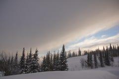 Χιονισμένο δάσος δέντρων πεύκων στη φύση κατά τη διάρκεια της θύελλας Στοκ εικόνα με δικαίωμα ελεύθερης χρήσης