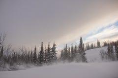 Χιονισμένο δάσος δέντρων πεύκων στη φύση κατά τη διάρκεια της θύελλας Στοκ φωτογραφία με δικαίωμα ελεύθερης χρήσης