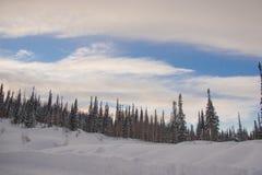 Χιονισμένο δάσος δέντρων πεύκων στη φύση κατά τη διάρκεια της θύελλας Στοκ εικόνες με δικαίωμα ελεύθερης χρήσης