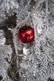 Χιονισμένο δέντρο έλατου με τη σφαίρα παιχνιδιών Στοκ Φωτογραφίες
