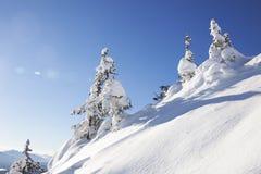 Χιονισμένο δέντρο έλατου μπλε ουρανός Χειμώνας Στοκ Φωτογραφίες
