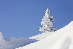 Χιονισμένο δέντρο έλατου μπλε ουρανός Χειμώνας Στοκ Εικόνες