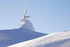 Χιονισμένο δέντρο έλατου μπλε ουρανός Χειμώνας Στοκ φωτογραφίες με δικαίωμα ελεύθερης χρήσης