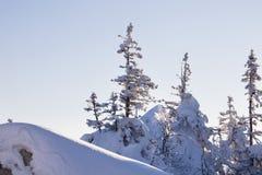 Χιονισμένο δέντρο έλατου μπλε ουρανός Χειμώνας Στοκ φωτογραφία με δικαίωμα ελεύθερης χρήσης
