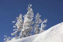 Χιονισμένο δέντρο έλατου μπλε ουρανός Χειμώνας Στοκ εικόνες με δικαίωμα ελεύθερης χρήσης