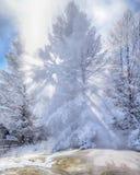 Χιονισμένο δέντρο αναδρομικά φωτισμένο με τις ηλιαχτίδες Στοκ Φωτογραφίες