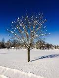 Χιονισμένο δέντρο μια χειμερινή ημέρα Στοκ εικόνα με δικαίωμα ελεύθερης χρήσης