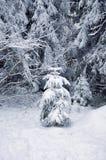 Χιονισμένο δέντρο πεύκων Στοκ εικόνες με δικαίωμα ελεύθερης χρήσης