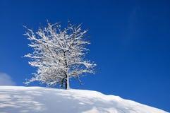 Χιονισμένο δέντρο σε ένα υπόβαθρο του μπλε ουρανού Στοκ Φωτογραφία