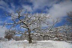 Χιονισμένο δέντρο Στοκ Φωτογραφία