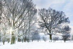 Χιονισμένο δάσος με την ανατολή ξημερωμάτων στοκ φωτογραφία