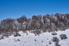 Χιονισμένο δάσος, στο πρώτο πλάνο ένα χιονώδες λιβάδι, στο κλίμα - ένας μπλε ουρανός Lago-Naki, η κύρια καυκάσια κορυφογραμμή, Ρ στοκ εικόνες με δικαίωμα ελεύθερης χρήσης