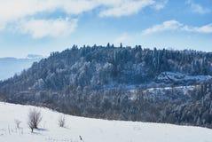 Χιονισμένο δάσος, στο πρώτο πλάνο ένα χιονώδες λιβάδι, στο κλίμα - ένας μπλε ουρανός Lago-Naki, η κύρια καυκάσια κορυφογραμμή, Ρ στοκ φωτογραφίες με δικαίωμα ελεύθερης χρήσης