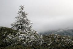 Χιονισμένο δέντρο πεύκων στοκ φωτογραφία με δικαίωμα ελεύθερης χρήσης