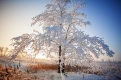 Χιονισμένο δέντρο το χειμώνα Στοκ Φωτογραφίες