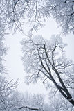 χιονισμένο δέντρο Στοκ εικόνα με δικαίωμα ελεύθερης χρήσης