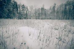 Χιονισμένο καθάρισμα στο δάσος που τονίζεται Στοκ Φωτογραφίες