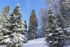 Χιονισμένο κομψό δάσος στους κλάδους υπάρχουν παιχνίδια Χριστουγέννων Στοκ φωτογραφία με δικαίωμα ελεύθερης χρήσης