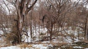 Χιονισμένο πάρκο κομητειών του Wichita Στοκ Εικόνες