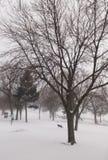 Χιονισμένο πάρκο με τα γυμνά δέντρα και τον κρύο χειμερινό καιρό στοκ εικόνα