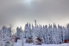 Χιονισμένο πέρασμα Ουάσιγκτον Evergreens Snoqualme ομίχλης ήλιων Στοκ Εικόνες