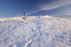 Χιονισμένο πεδίο Στοκ Εικόνες