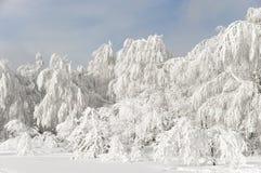 Χιονισμένο χειμερινό δάσος Στοκ φωτογραφίες με δικαίωμα ελεύθερης χρήσης