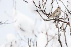 Χιονισμένο χειμερινό τοπίο Στοκ Φωτογραφίες