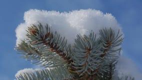 Χιονισμένο χριστουγεννιάτικο δέντρο, φωτεινό φως του ήλιου που πέφτει με το χιόνι, snowflakes που πέφτει από τα δέντρα φιλμ μικρού μήκους