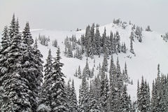 Χιονισμένο Hill με φορτωμένα τα χιόνι αειθαλή δέντρα Στοκ Φωτογραφίες